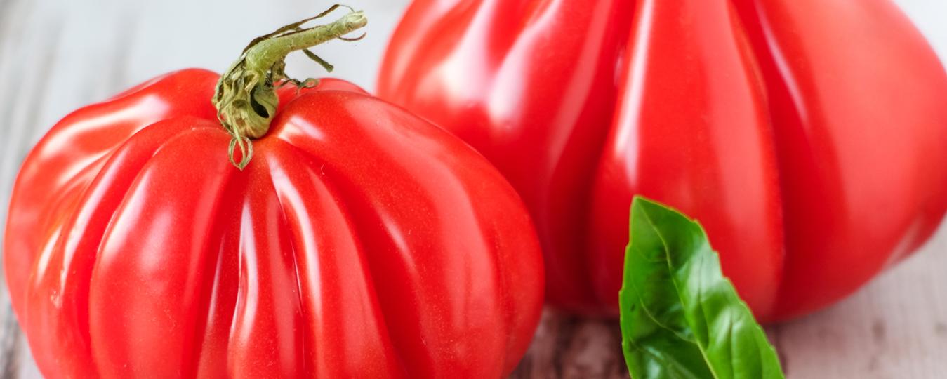 Las mejores variedades de tomate